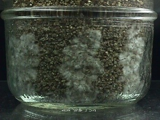 micelio.jpg