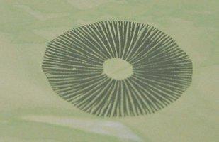 panmg-karapana31-10.jpg