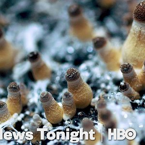 How Denver Decriminalized Magic Mushrooms (HBO)